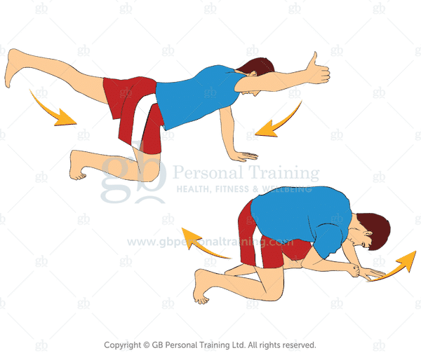 Bird Dog with Rotation Exercise